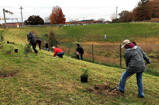 reforestation, Prince William County