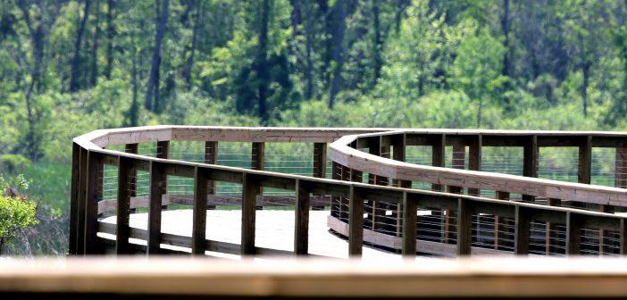 Neabsco Regional Park, boardwalk