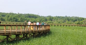 neabsco creek boardwalk