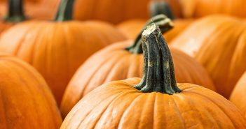pumpkins, family fun 1019