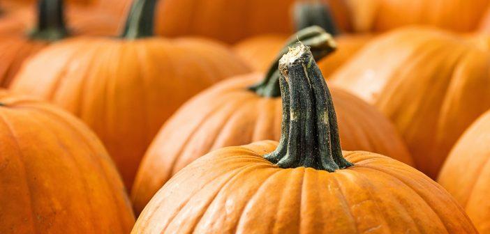 pumpkins, family fun 1019