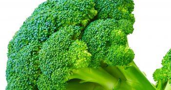 Home & HEarth 1219, broccoli