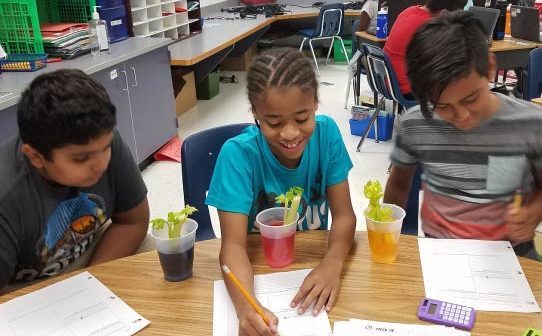 PWCS, Swans Creek, celery experiment