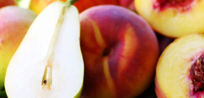 peaches and pears, Home & Hearth 0220