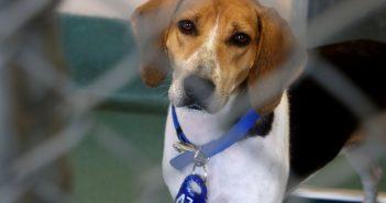 dog, animal shelter