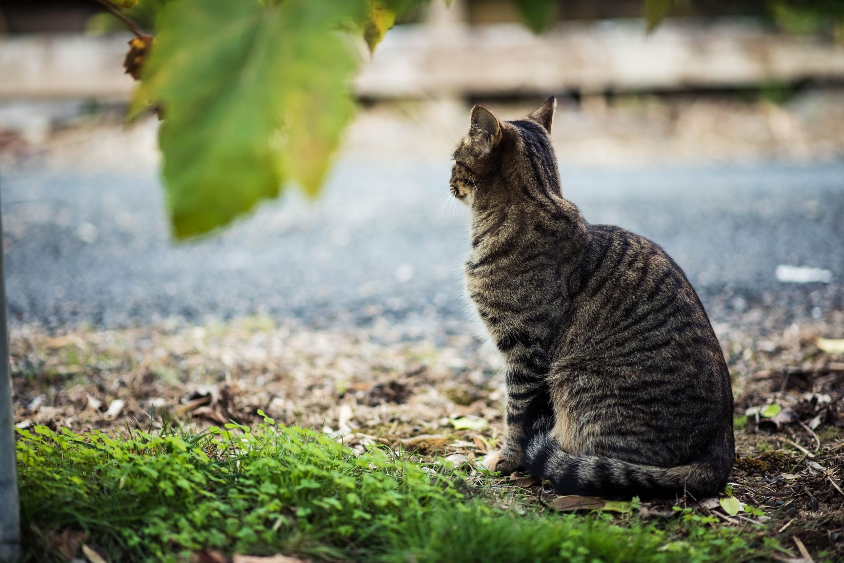 Recovering A Lost Pet Prince William Living
