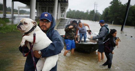 Fetch Pet Care, hurricane