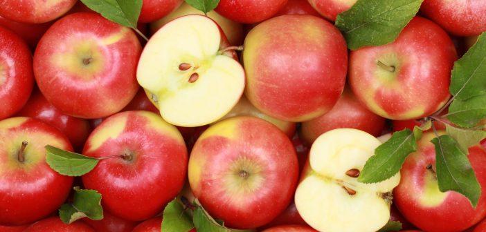 apples, family fun 0920