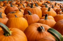 pumpkins, local flavor 1020