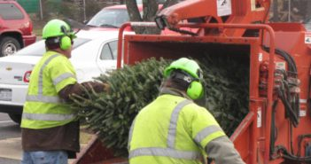 Christmas tree grinding, recycling
