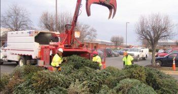 NOVEC, Christmas tree recycling