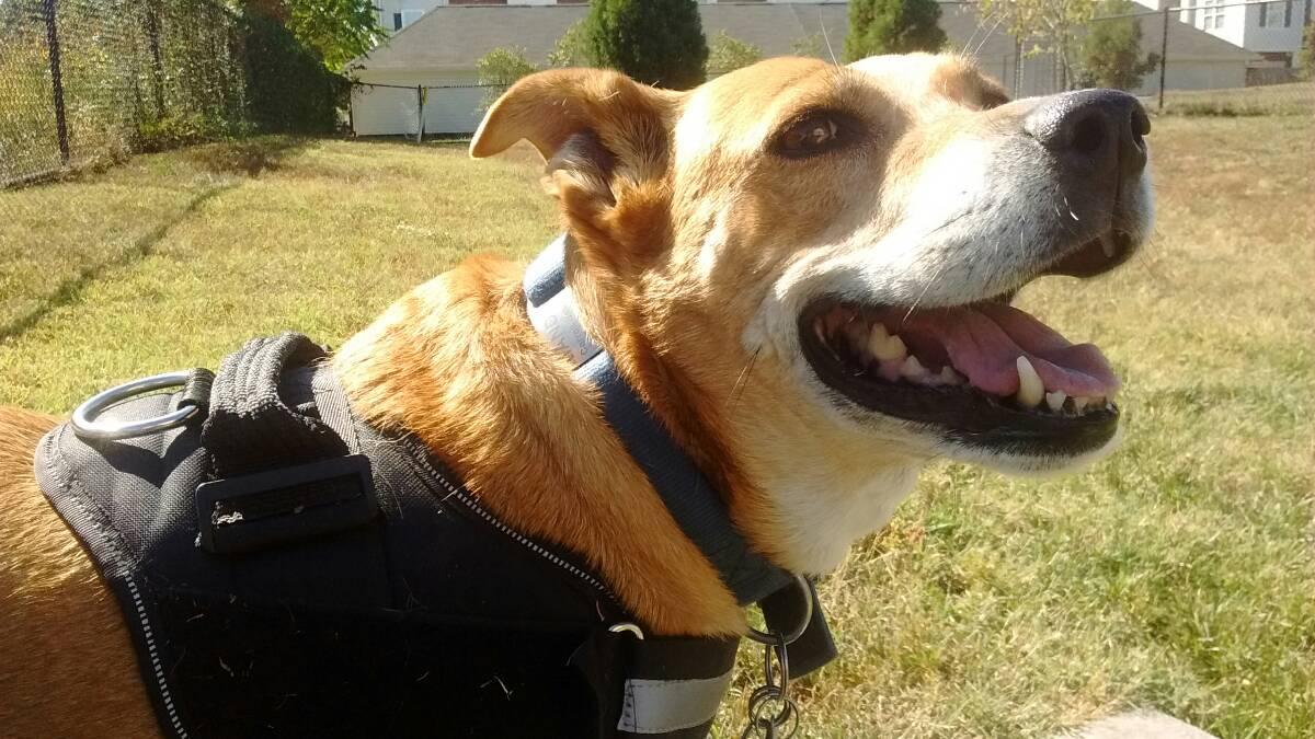 Fetch! Pet Care, Mandy