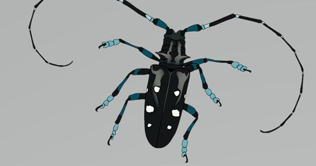 American Longhorned Beetle