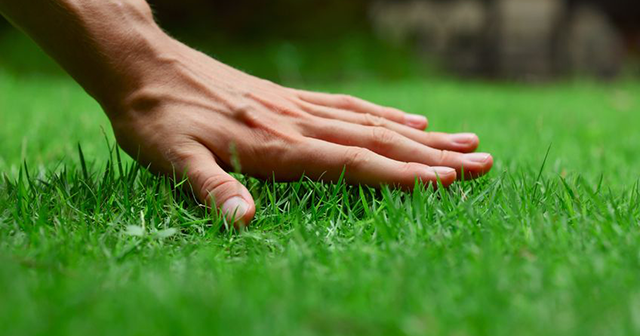 lawn, grass with hand